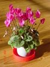 flower0512blog